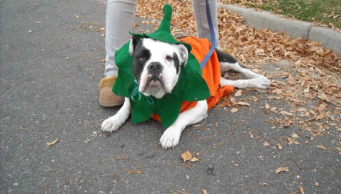 K9 Canter 5K Costume Contest