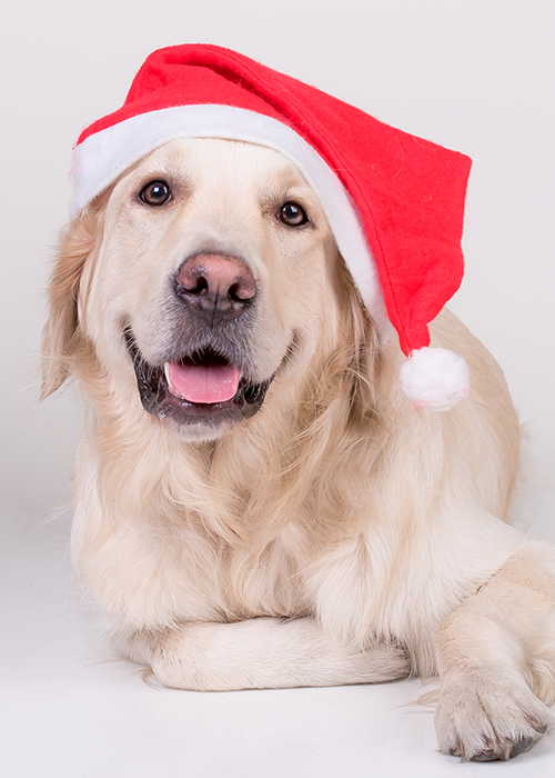 Pet Santa Photos