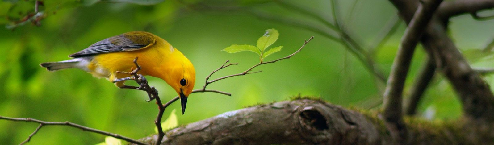 Birding Classes