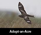 Adopt-an-Acre