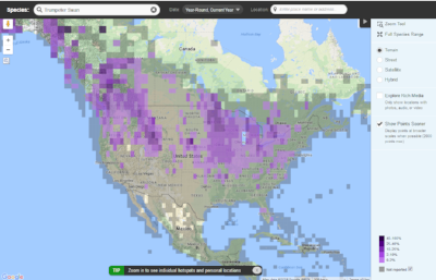 "Ebird has an online map of Trumpeter Swan Sightings- check it out for the ""hot spots"" nearest you"