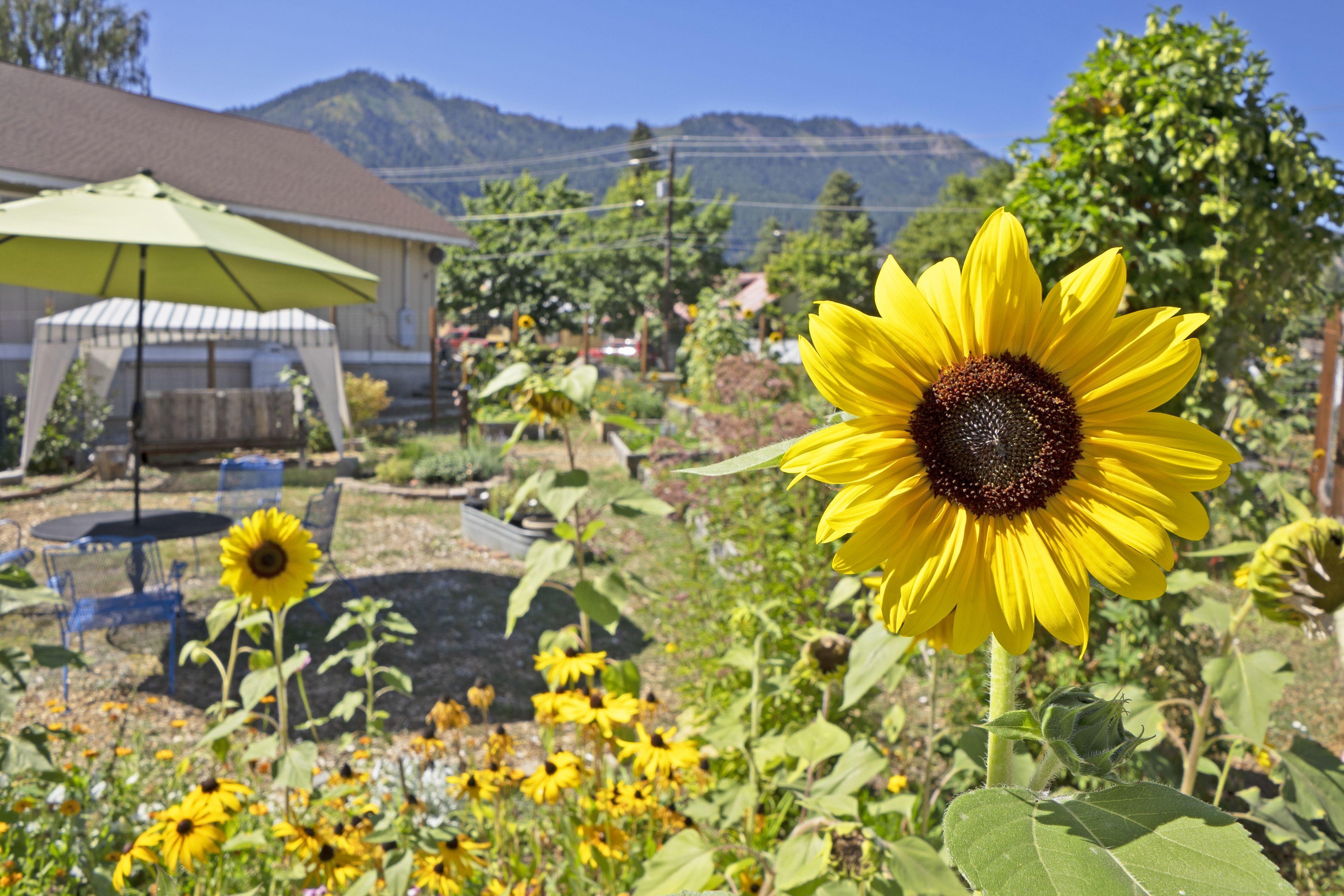 Cascade Medical  Foundation Art & Garden Tour