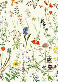 Calling all Gardeners: Discoveries from Plant Archives