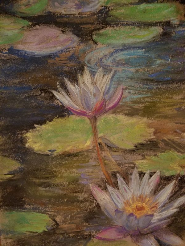 Plum Water Lillies