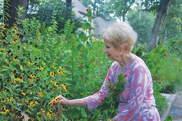 Buzz About Native Plants