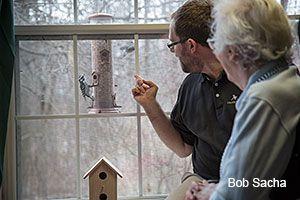 Observing a bird feeder