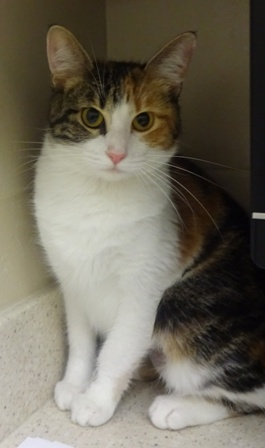 Pixie- Meet me at the Petco on 56th & Hwy 2