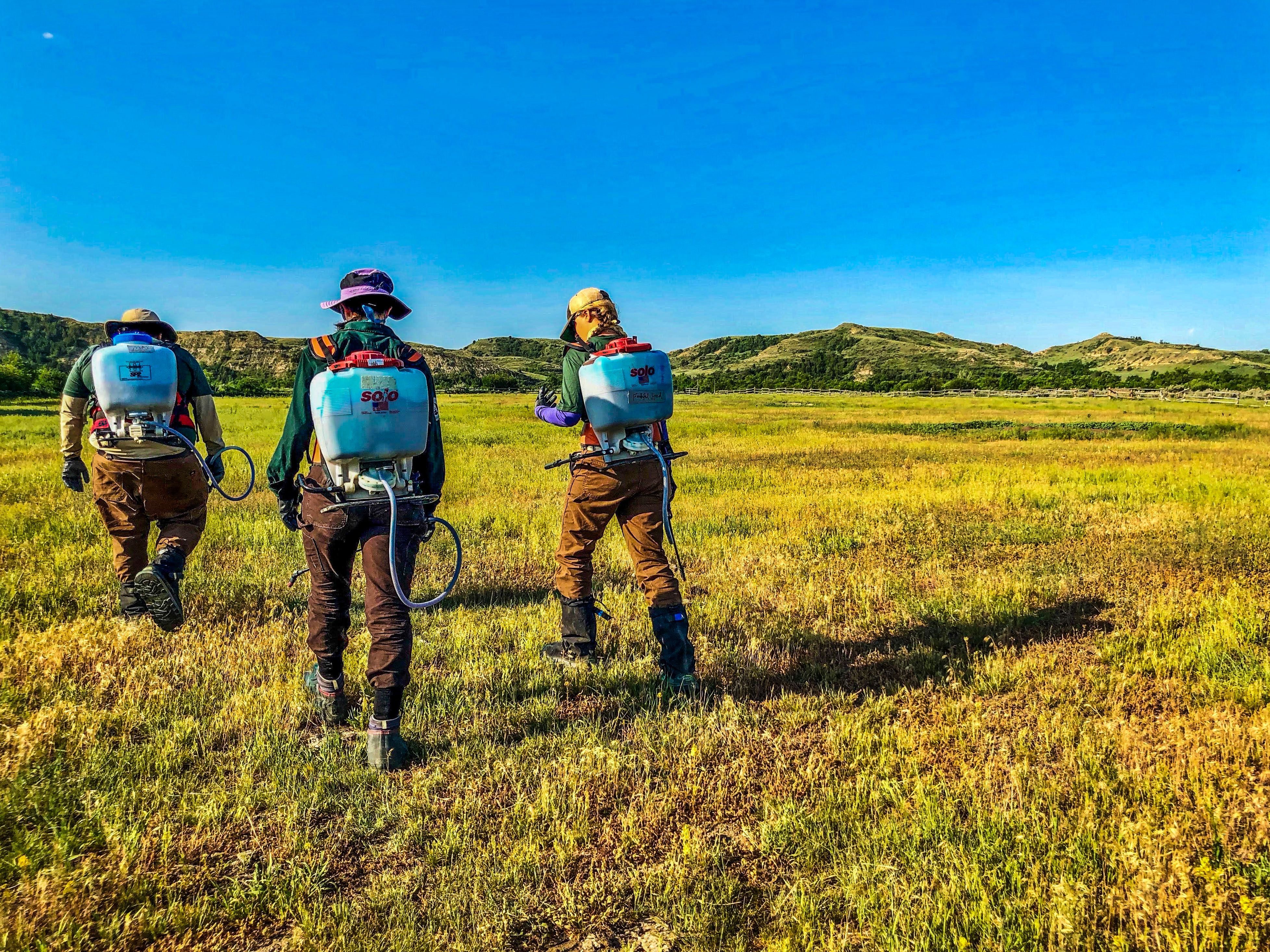 Three crew members walking in a field with weed sprayers on their backs indicating they are a Wildland Restoration Team Crew