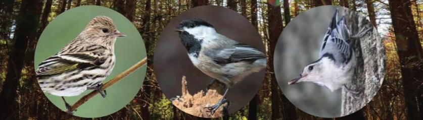 The Fight to Protect Our Forests Audubon Supports the Rhode Island Woodland Preservation and Stewardship Act of 2019 By Todd McLeish