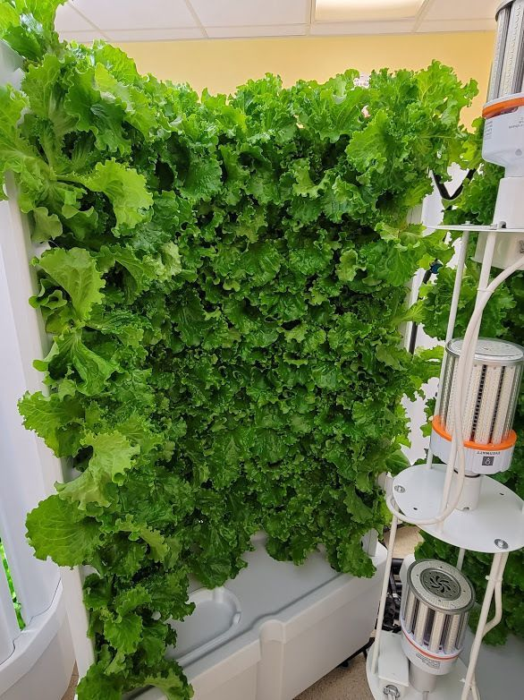 Hydroponic Gardening at The Food Bank