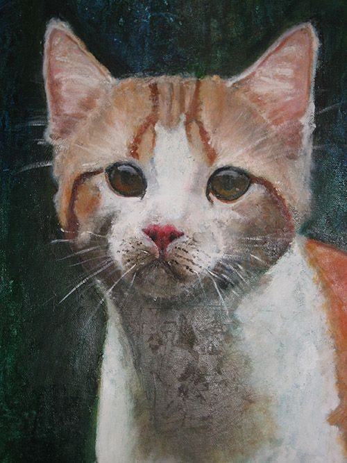 Detail of a Cat