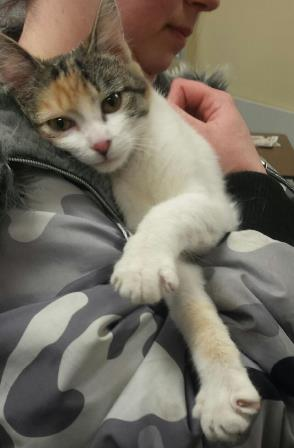 Lucy - Meet me at the 48th Street Petco!