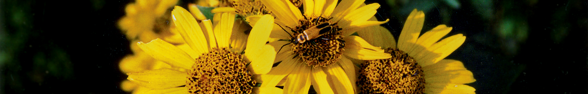 The Flora of Nebraska Kaul, Sutherland & Rolfsmeier