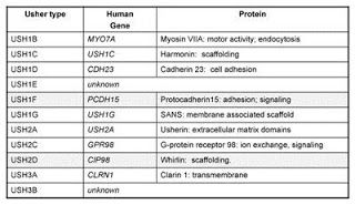 This is a table showing which usher type goes with which human gene and protein