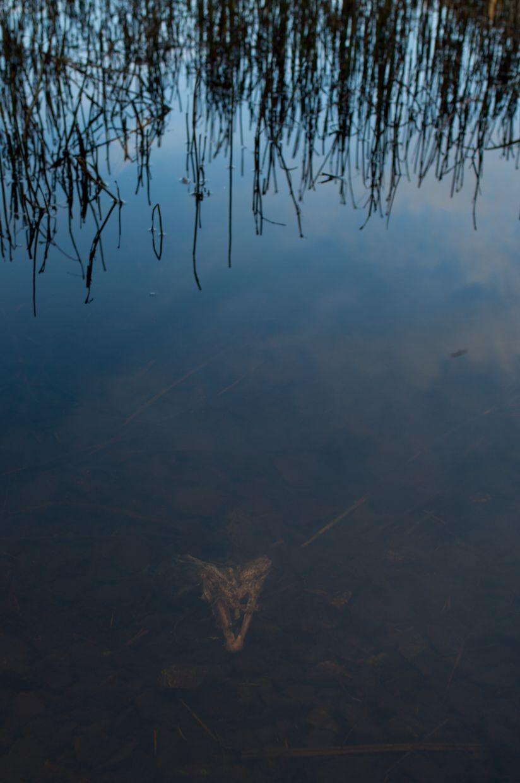 Ward Lake 1, Skull with Grass