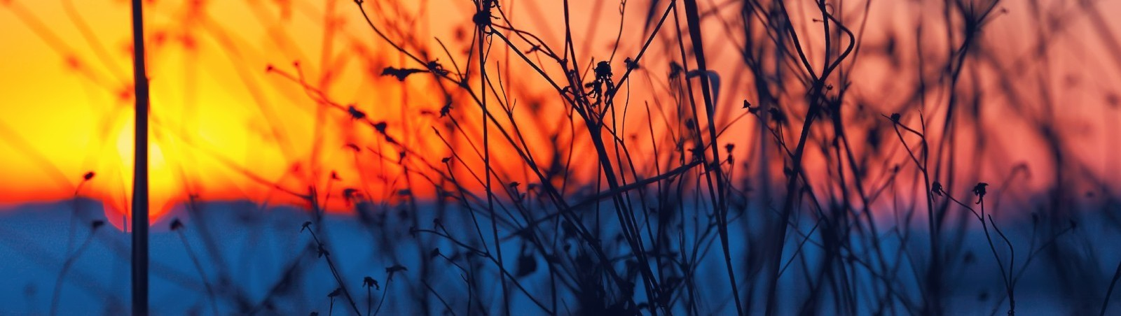 A bare shrub in the foreground with a sunset in the background.