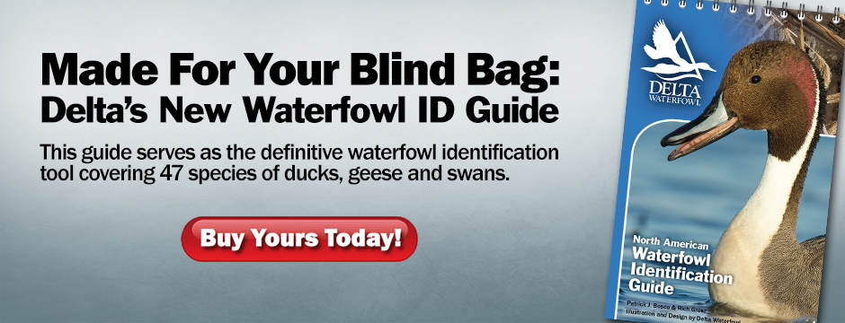 Waterfowl ID Guide