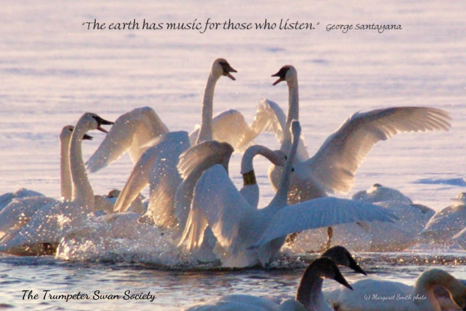 "Fridge Magnet ""The earth has music for those who listen"" $4"