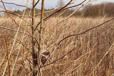 Fauna: Winter Nests