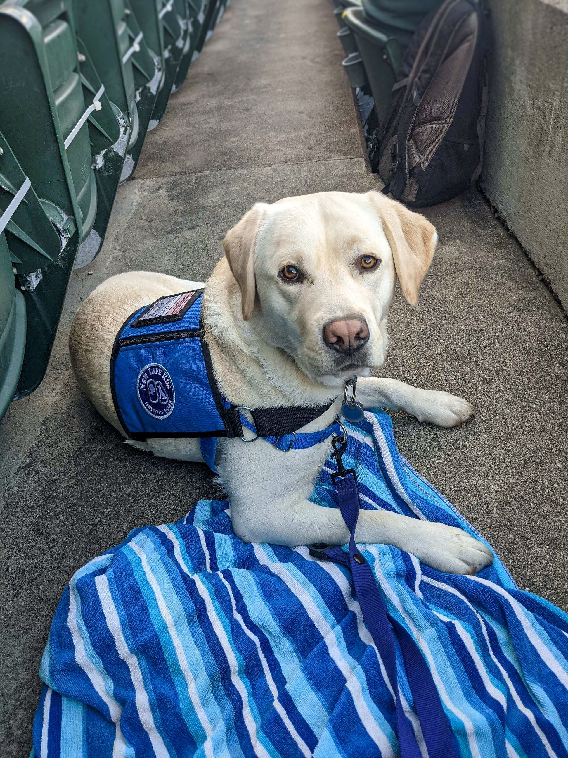 How Research on Service Dogs is Changing PTSD Treatment Models