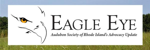 Audubon Society of Rhode Island Eagle Eye Advocacy update blog