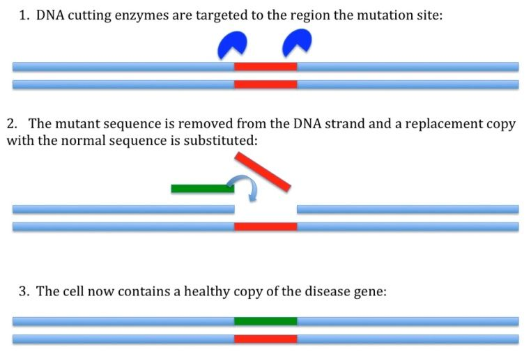 A picture showing the process of gene editing.