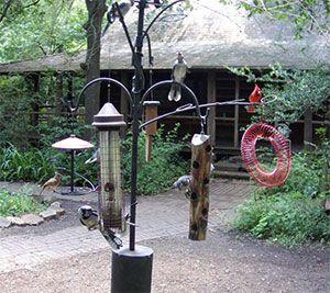 Bird Feeder Camera at Edith Moore