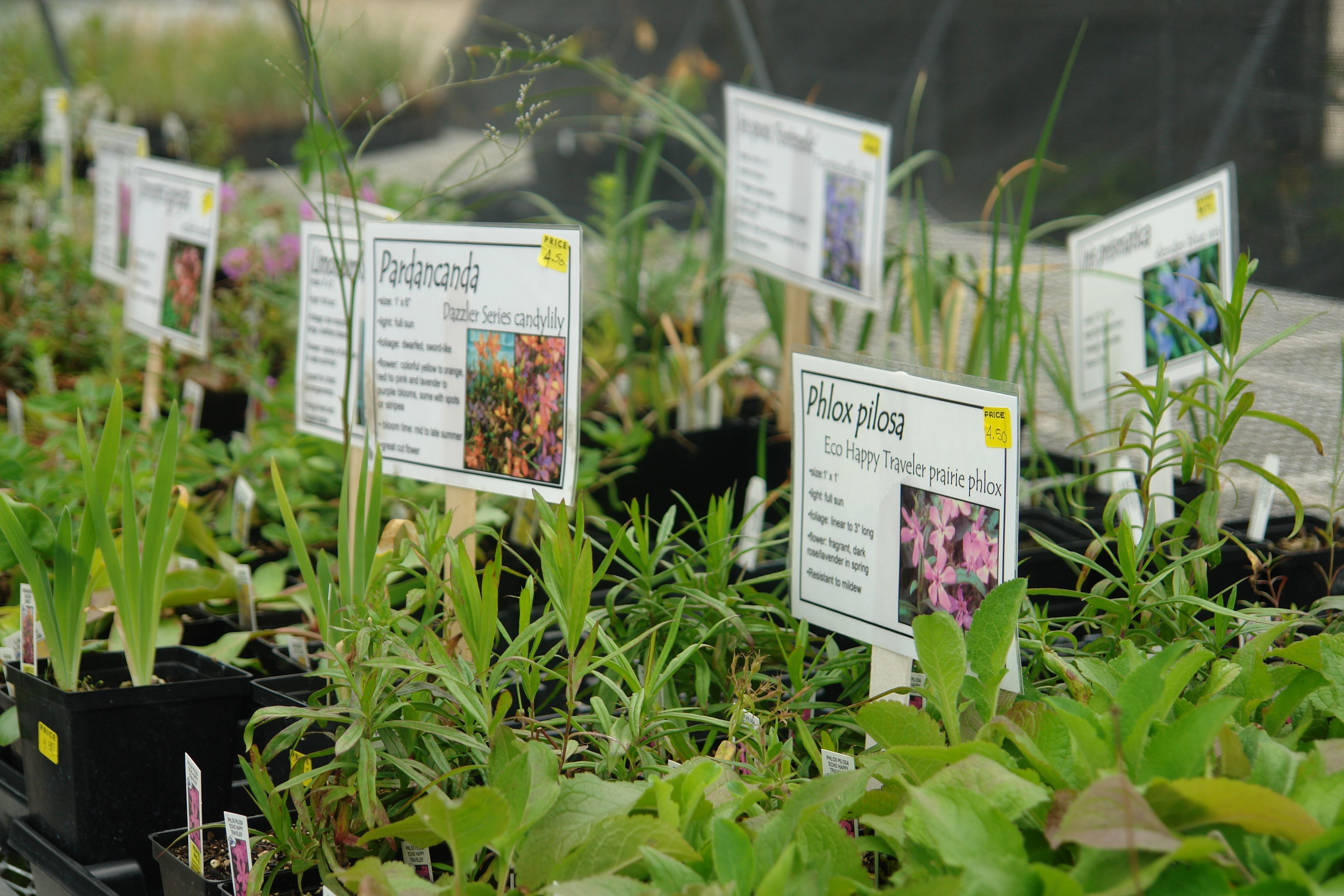 Pick up dates for Spring Affair plants
