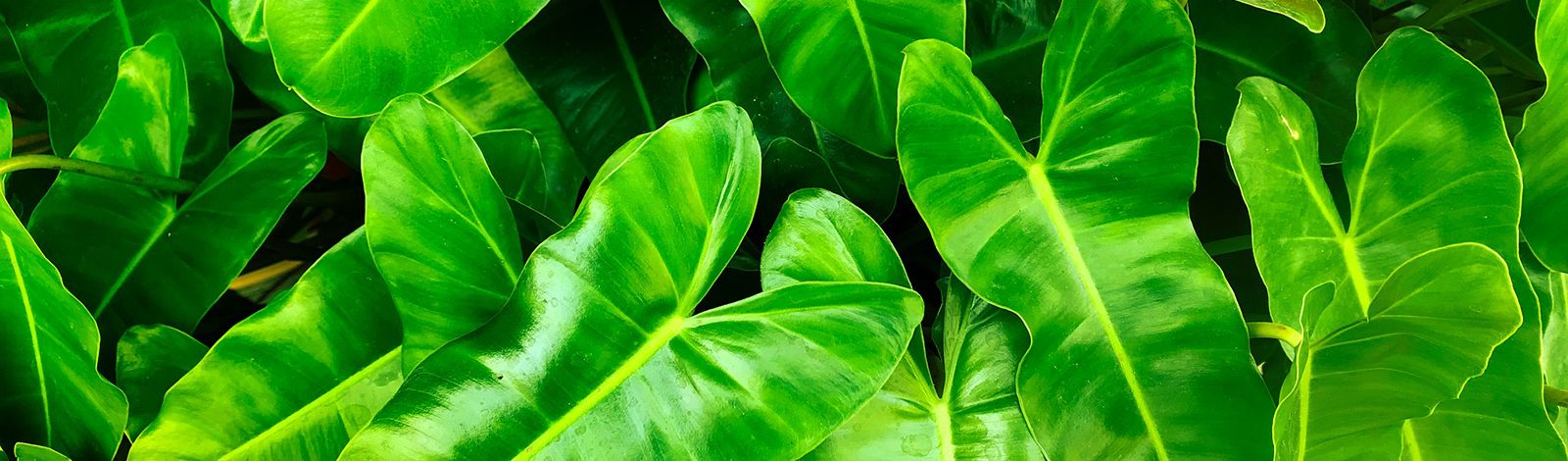 Vibrant green leaves