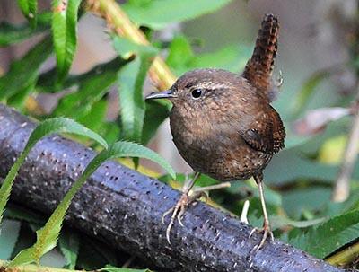 Birds of the Park