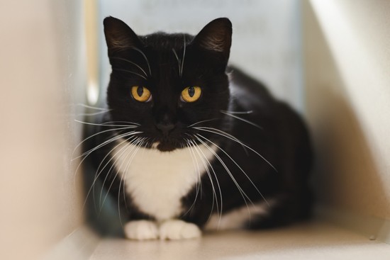 Marie - Meet me at the 56th & Hwy 2 Petco!