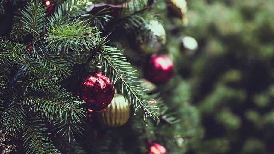 Audubon Annual Tree Sale and Photos with Santa INFO