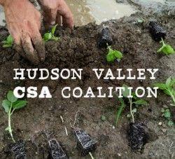 Hudson Valley CSA Coalition