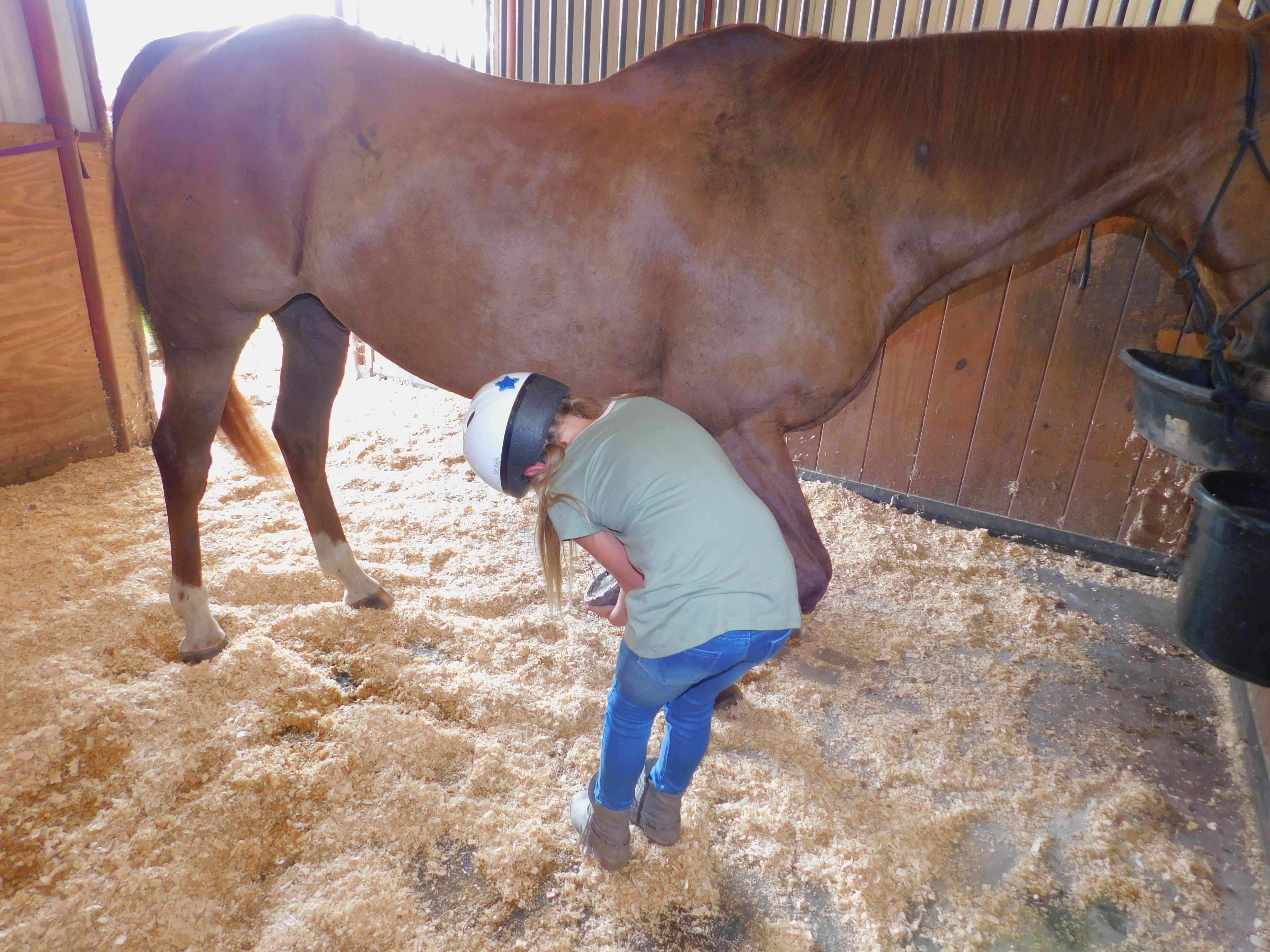 Beginner I and II Western Horse Camp