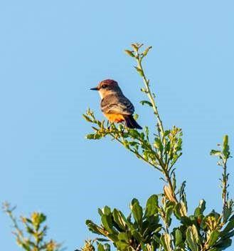 Houston Botanic Garden Bird Survey