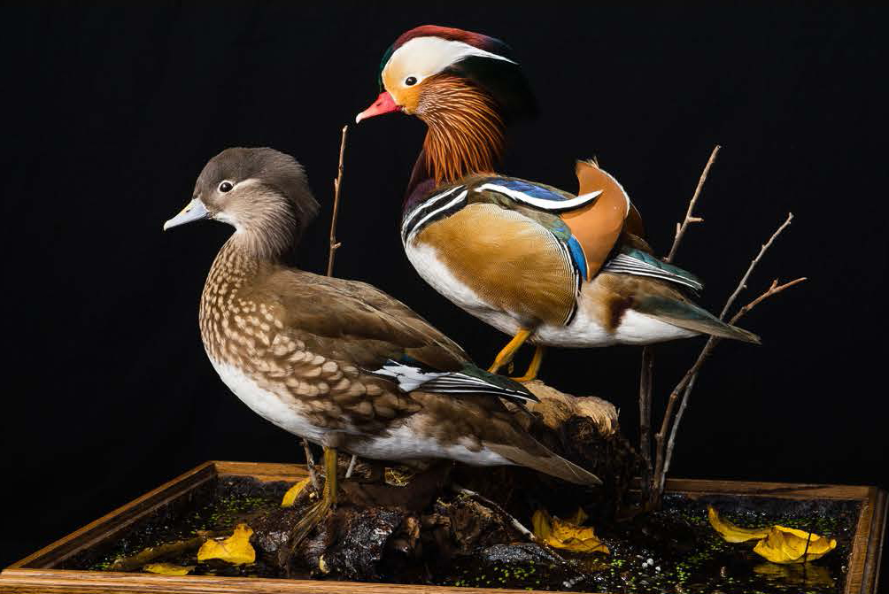 Game Birds of the World
