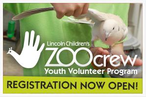 Zoo Crew 2017