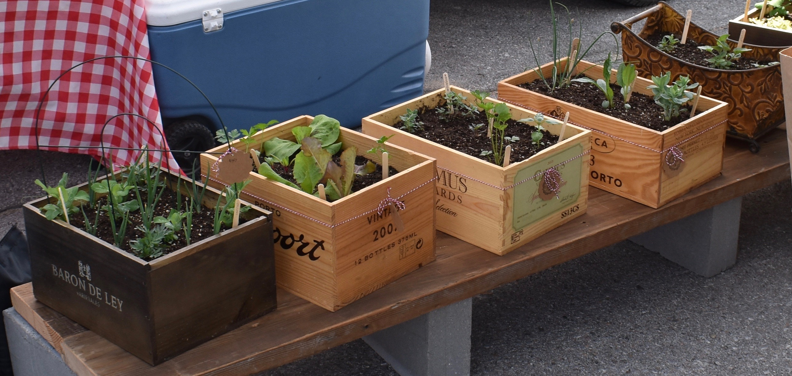 Seed Grow Eat*