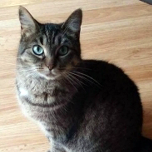 LOST: Cat (Raja)