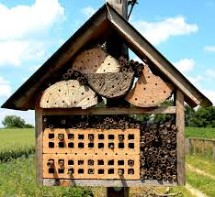 Nests for Native Bees