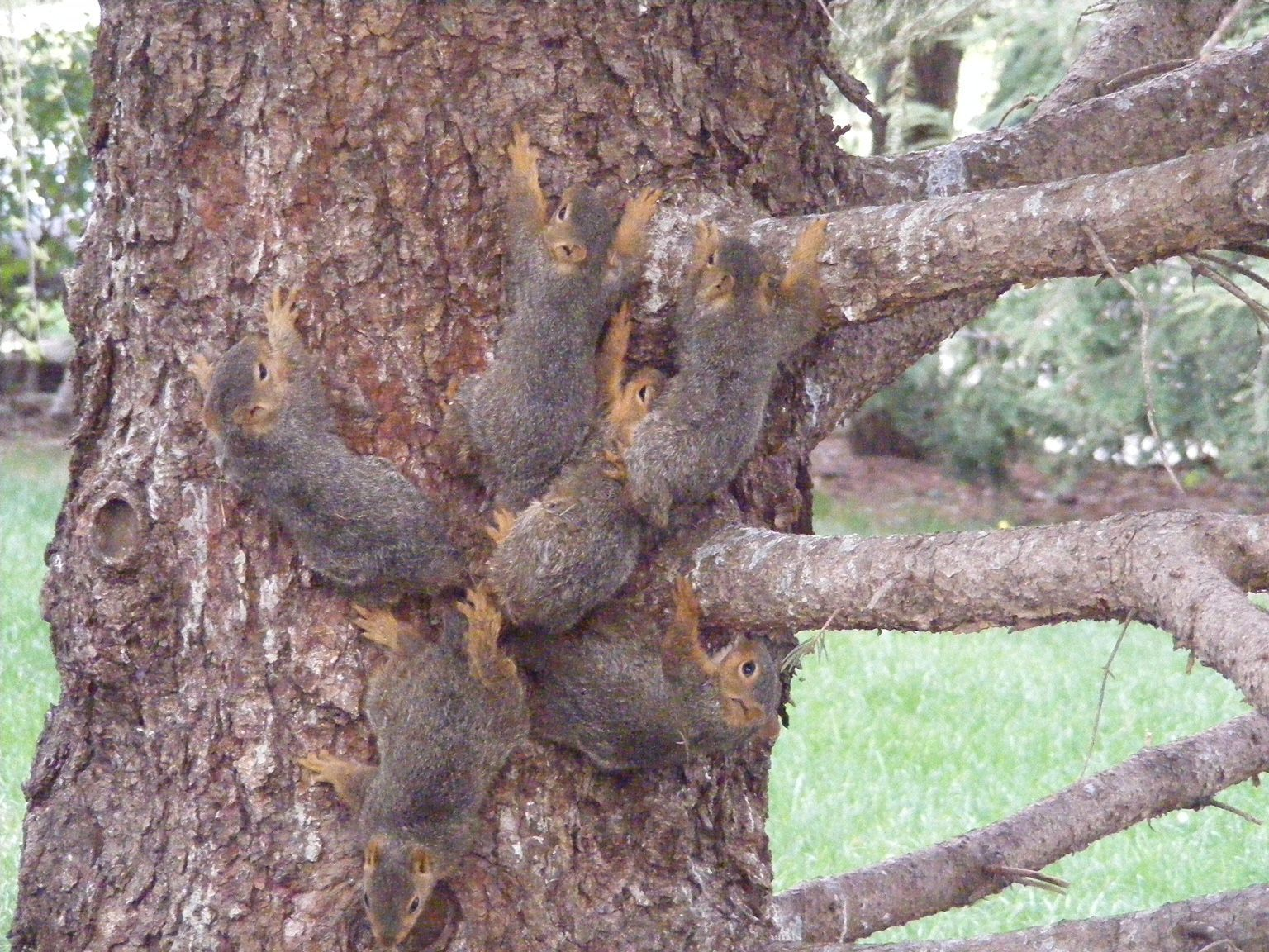 Squirrels Tied in Knots Unimpressed with their Celebrity