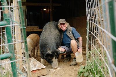 Melinda Brown - Pigs