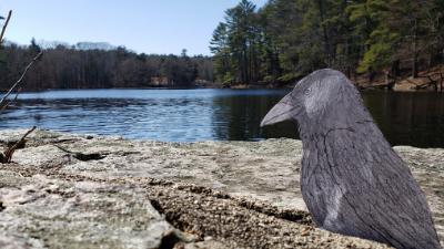 Rovin' Raven Challenge