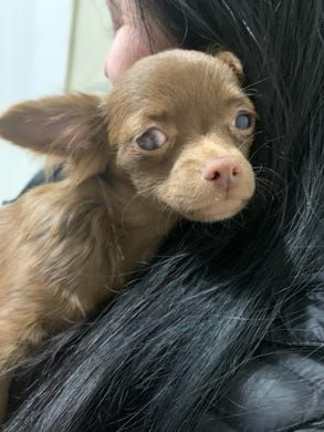 North Jersey animal shelters take in dogs rescued from Scotch Plains puppy mill