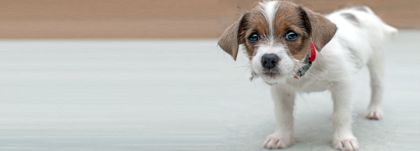 Alternatives to Surrendering - SPCA for Monterey County