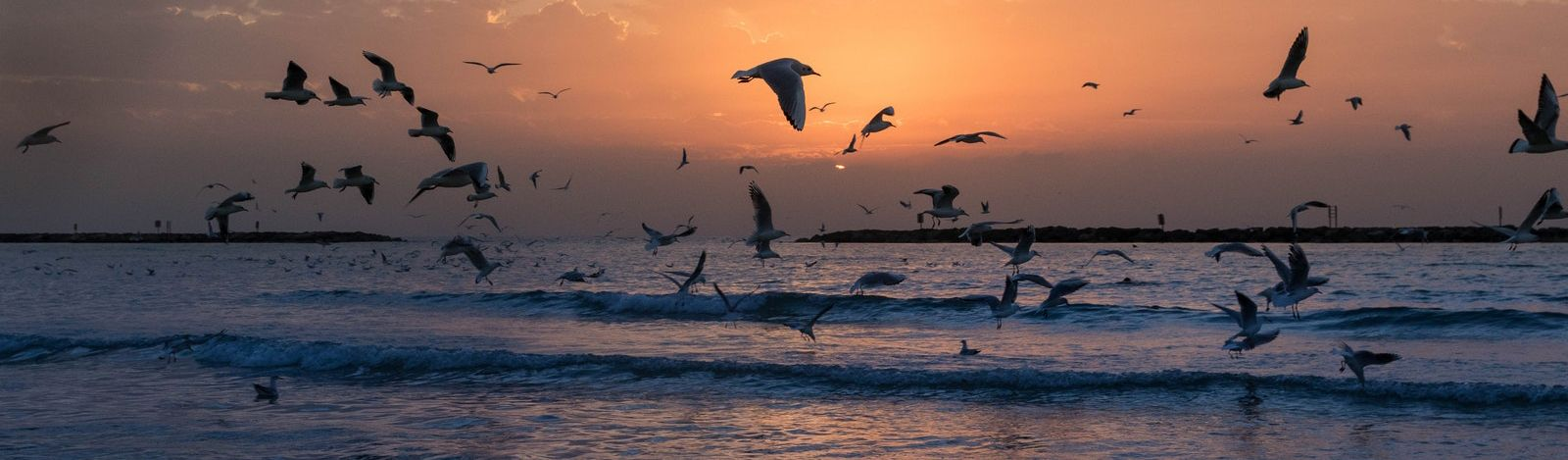 A group of birds flying on the Israeli beach at sunset