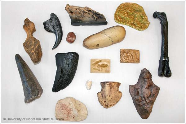 Dinosaur Clues & Traces