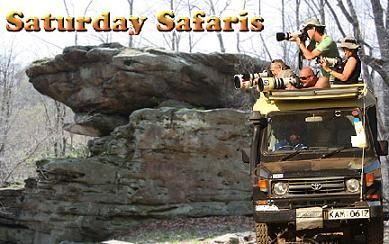 Saturday Safari