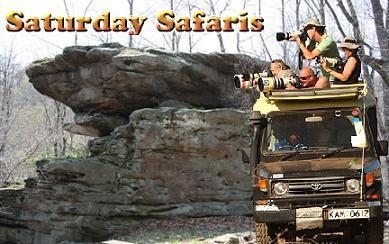 Saturday Safari Logo