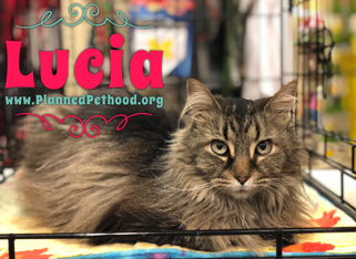 Lucia adopted 040818